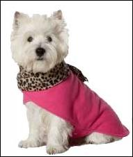 perro-jersey.JPG